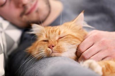 el gato te dice te quiero amasandote