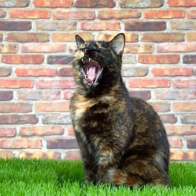 gato carey jardin