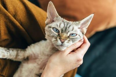 gato en brazos de humano