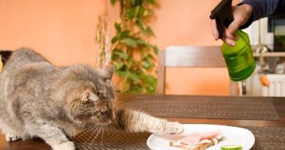 gato roba comida aspersor