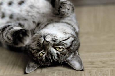 los gatos necesitan rutinas