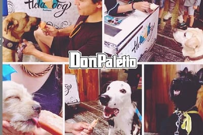 Helados para perros. Fuente: Instagram /@don_palettos