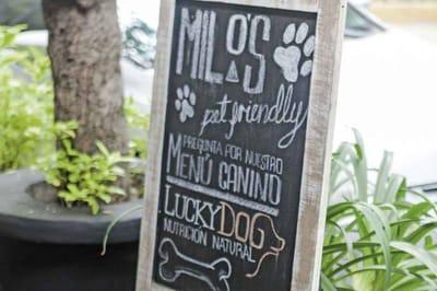 Milo's, un bistró con menú canino. Fuente: Foodandtravel