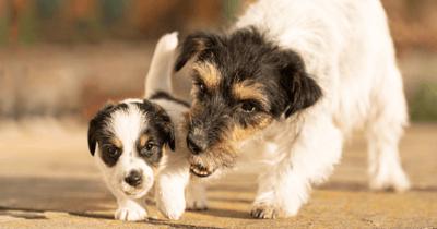 Moederhond met puppy
