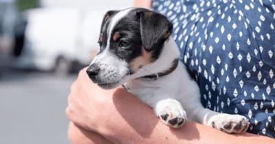 8 weken oude puppy in armen van nieuw baasje