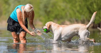 Hond en vrouw staan in het water. Hond brengt bal terug.