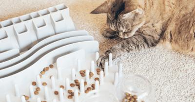 Kat speelt met labyrint met brokjes