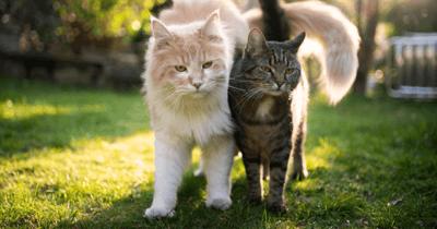 Grote en kleine kat naast elkaar