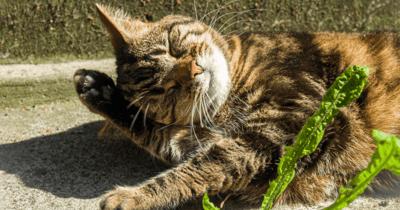 Spinnende kat in zon