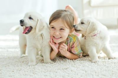 bambina-felice-con-due-labrador-color-crema