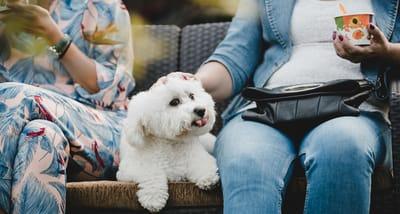 cane-maltese-seduto-insieme-ai-proprietari