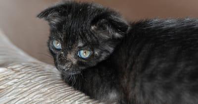 gatto-con-alopecia-malattia-della-pelle