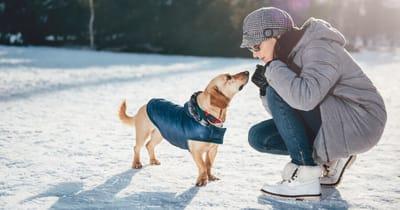 cane-in-inverno-con-cappotto-insieme-a-ragazza-sulla-neve