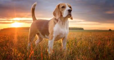 Cane su collina con il sole