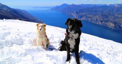 cani sulla neve con lago sullo sfondo