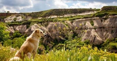 cane in montagna osserva paesaggio