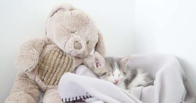 Kitten slaapt naast speelgoed konijn