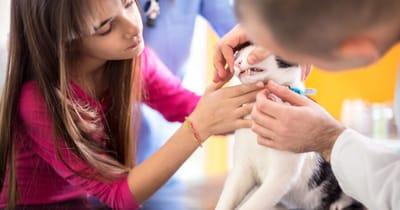 un-gatto-viene-visitato-dal-veterinario