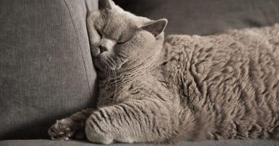 gatto che dorme su divano