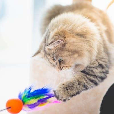 Kat speelt met speeltje