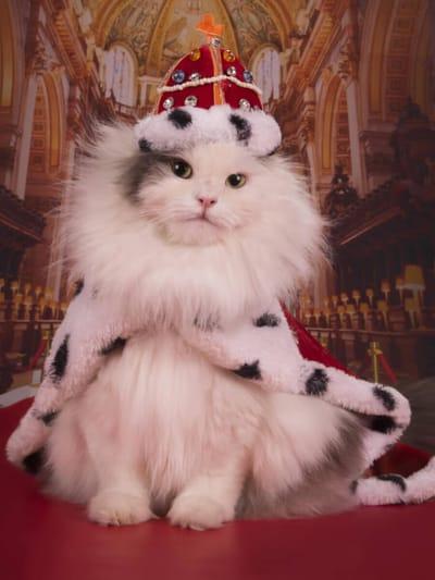 gatto con corona