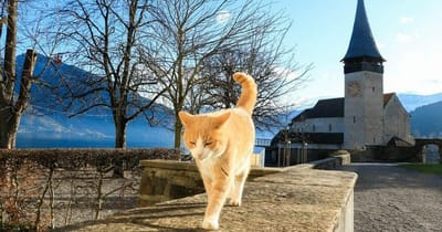 gatto-passeggia-in-montagna