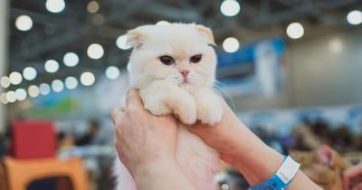 gattino-in-fiera