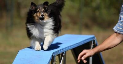 Cane sopra una passerella blu