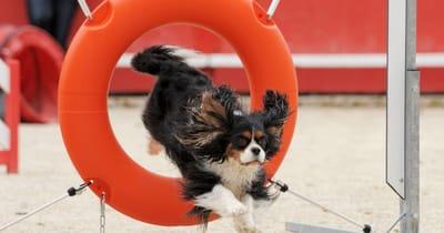 Cane salta dentro un pneumatico arancione