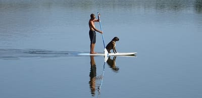 umano e cane su paddle