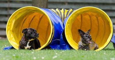 Cani sdraiati dentro due tunneli rigidi