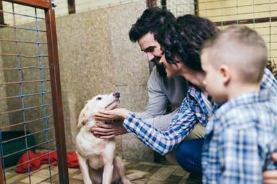 rodzina odwiedza psa w schronisku