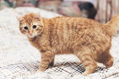 kot na łóżku