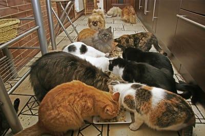 koty w schronisku