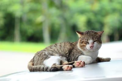 kot z chorym pyszczkiem