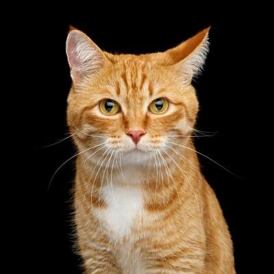 kot słucha