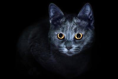 oczy kota nocą