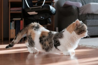 kotka w rui