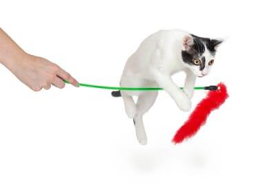 kot skacze przez patyk