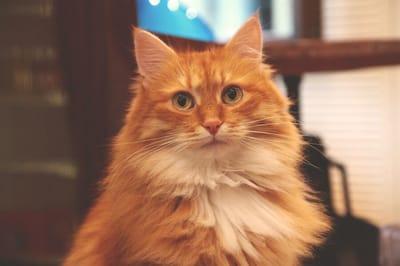 imię dla rudego kota