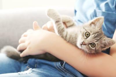 kotek na rękach