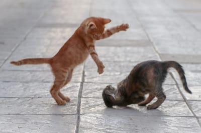 kotki się bawią