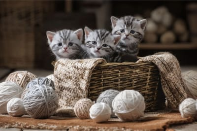 małe kotki sennik
