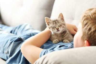 mały kotek le ży na chłopcu