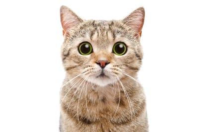 kot patrzy