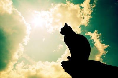 kot z niebem w tle