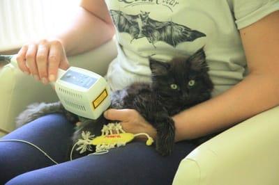 niepelnosprawny kot2