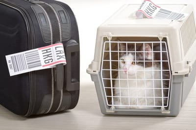 kot na lotnisku z paszportem dla kota