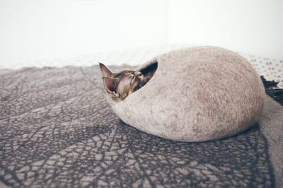 kokon dla kota