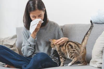 Alergiczka z kotem
